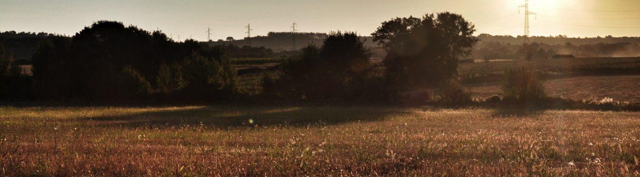 Sommermorgen in Frankreich – Languedoc 2012