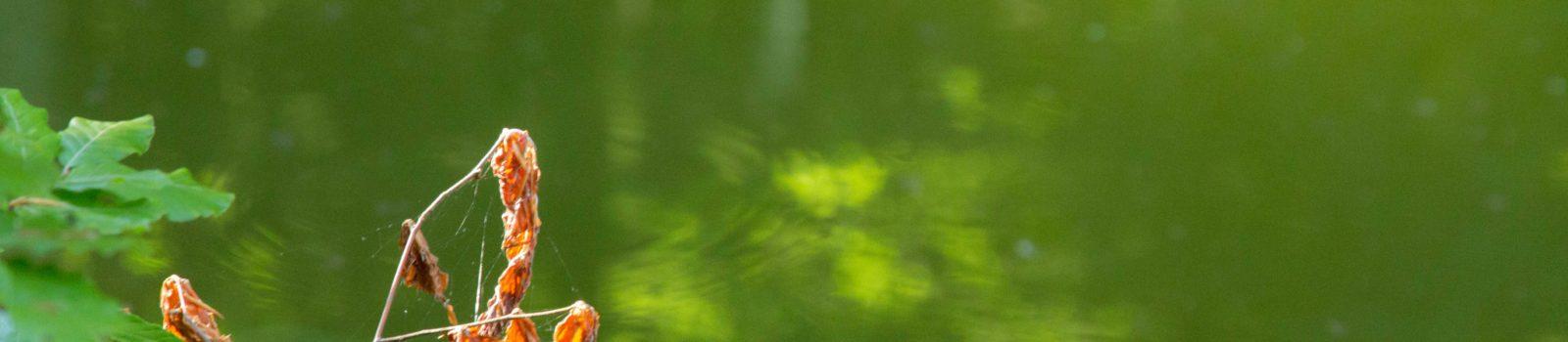 Am magischen grünen Teich…